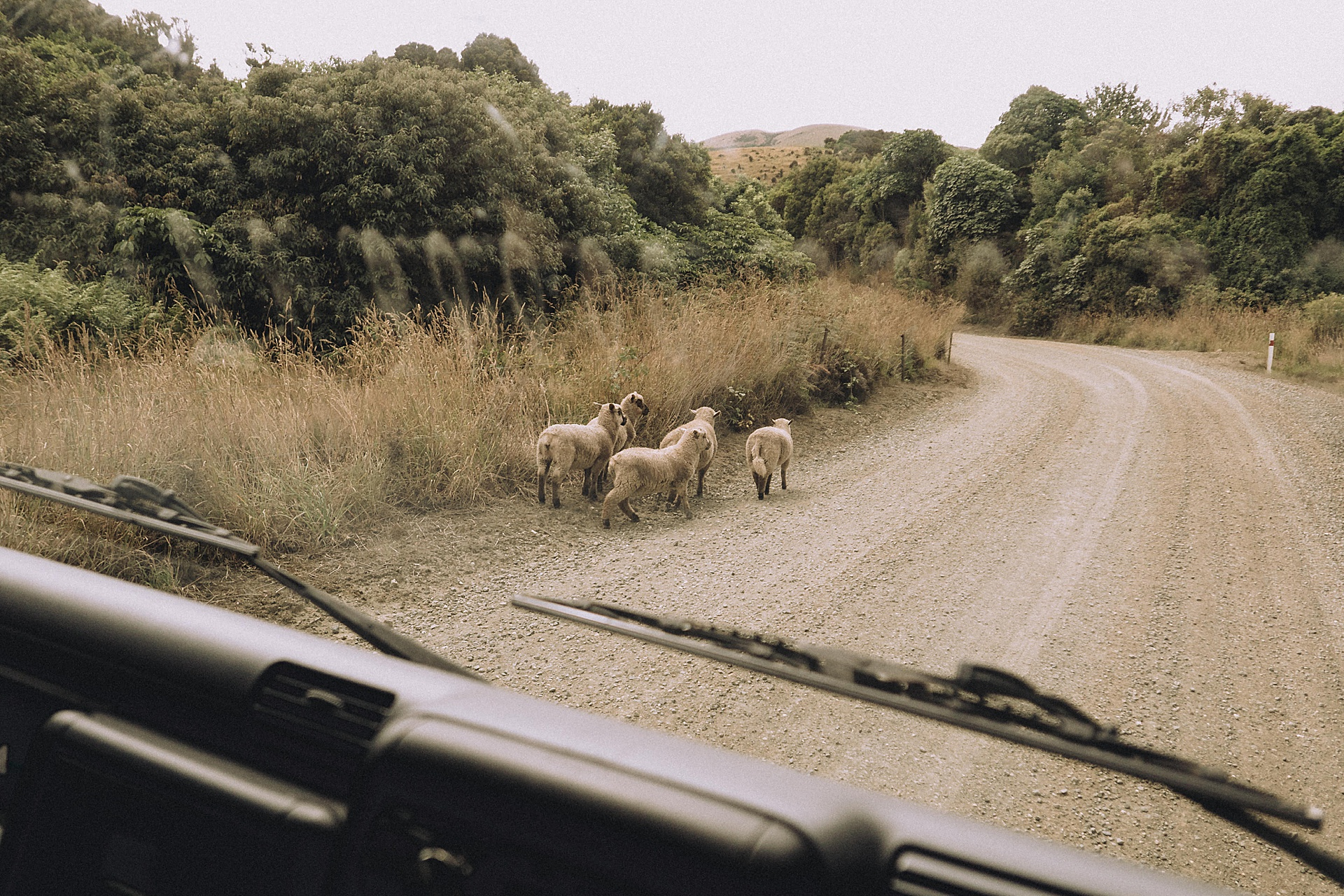 family-roadtrip-neuseeland-travelnewzealand-danielzube_0528.jpg