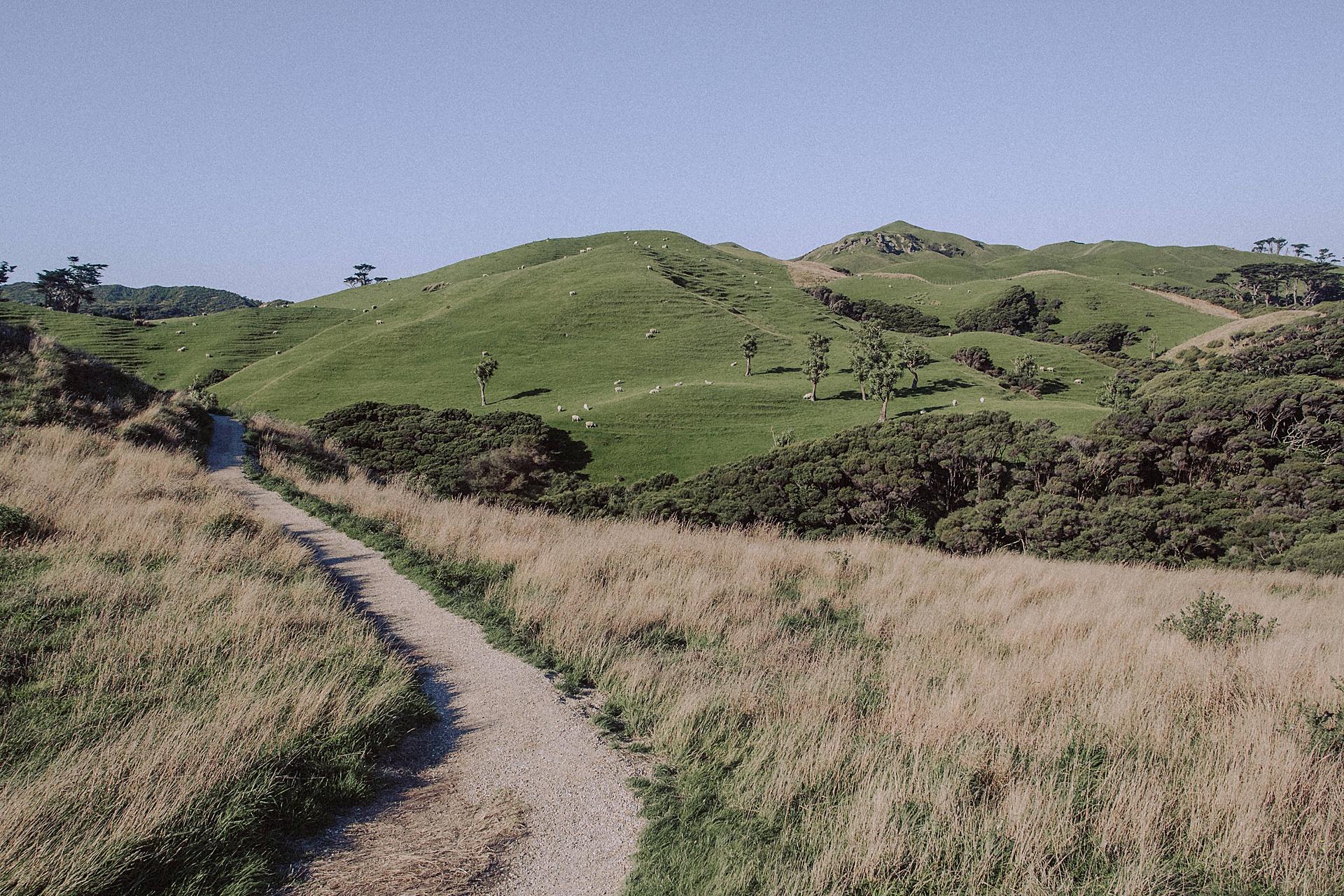 family-roadtrip-neuseeland-travelnewzealand-danielzube_0568.jpg